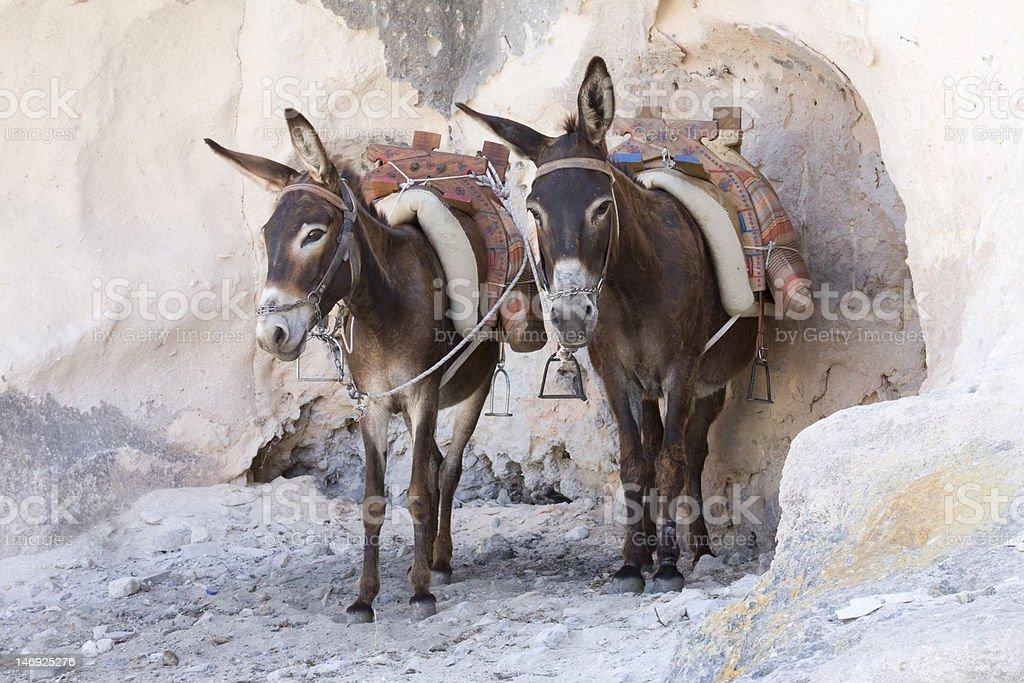 Donkey's in Lindos stock photo