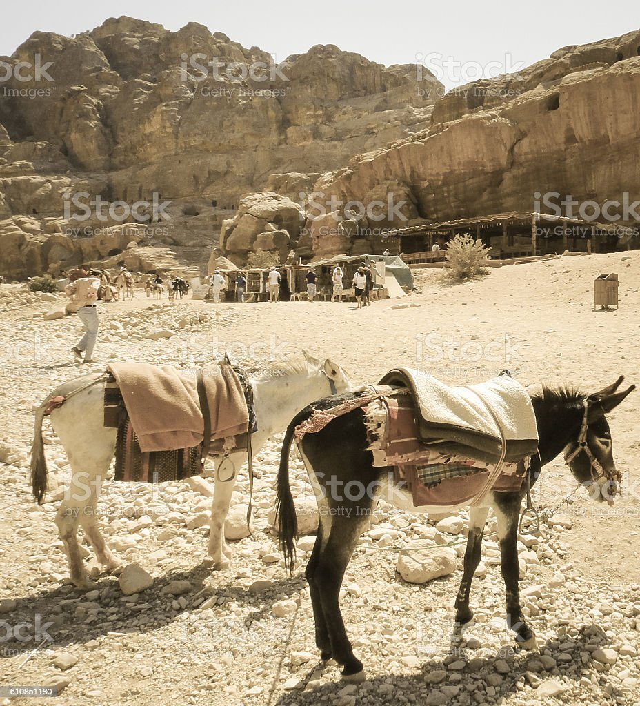 Donkeys in Petra. Nabataeans ancient city in Jordan stock photo