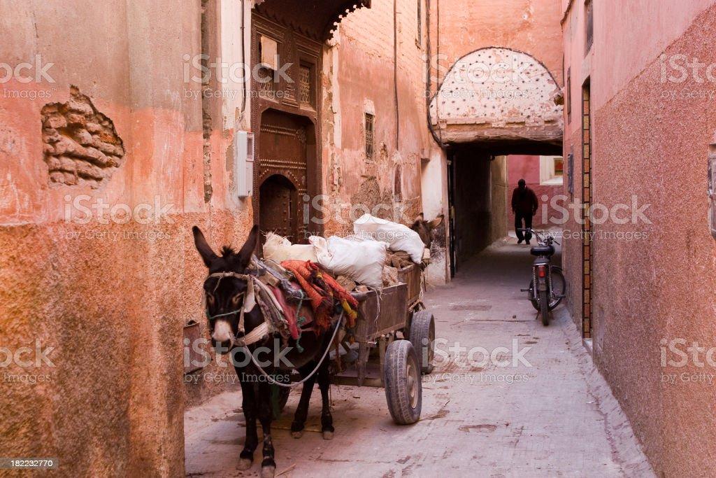 Donkeys of Marrakesh royalty-free stock photo
