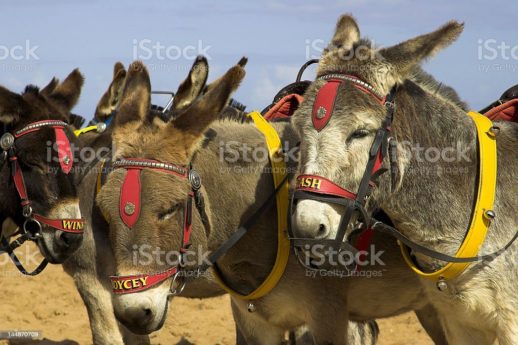 Donkey's On A Beach stock photo