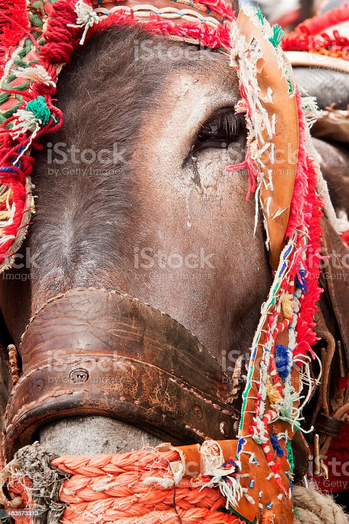 Donkeys. stock photo