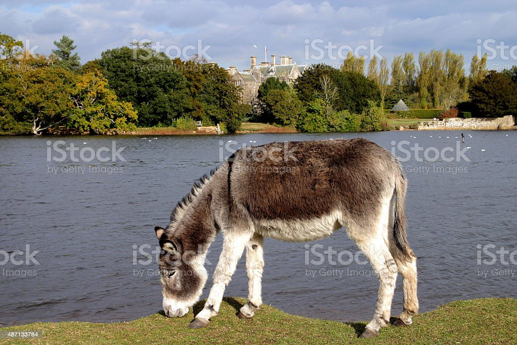 Donkeys stock photo