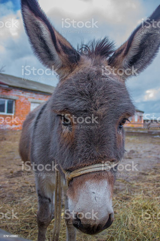 donkeys portret on the sky stock photo