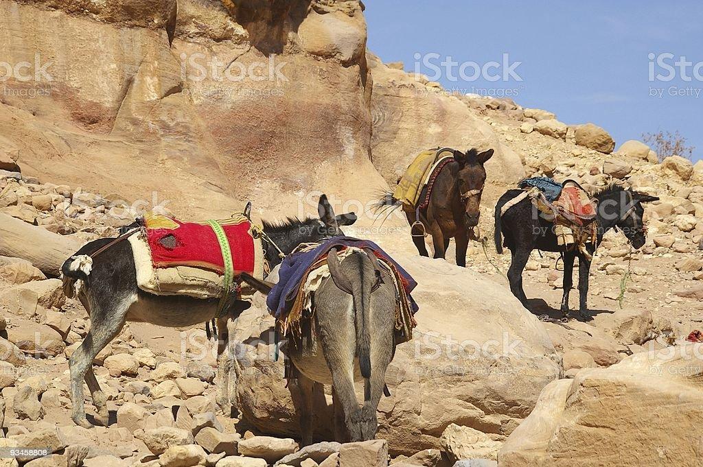 donkeys rural life stock photo