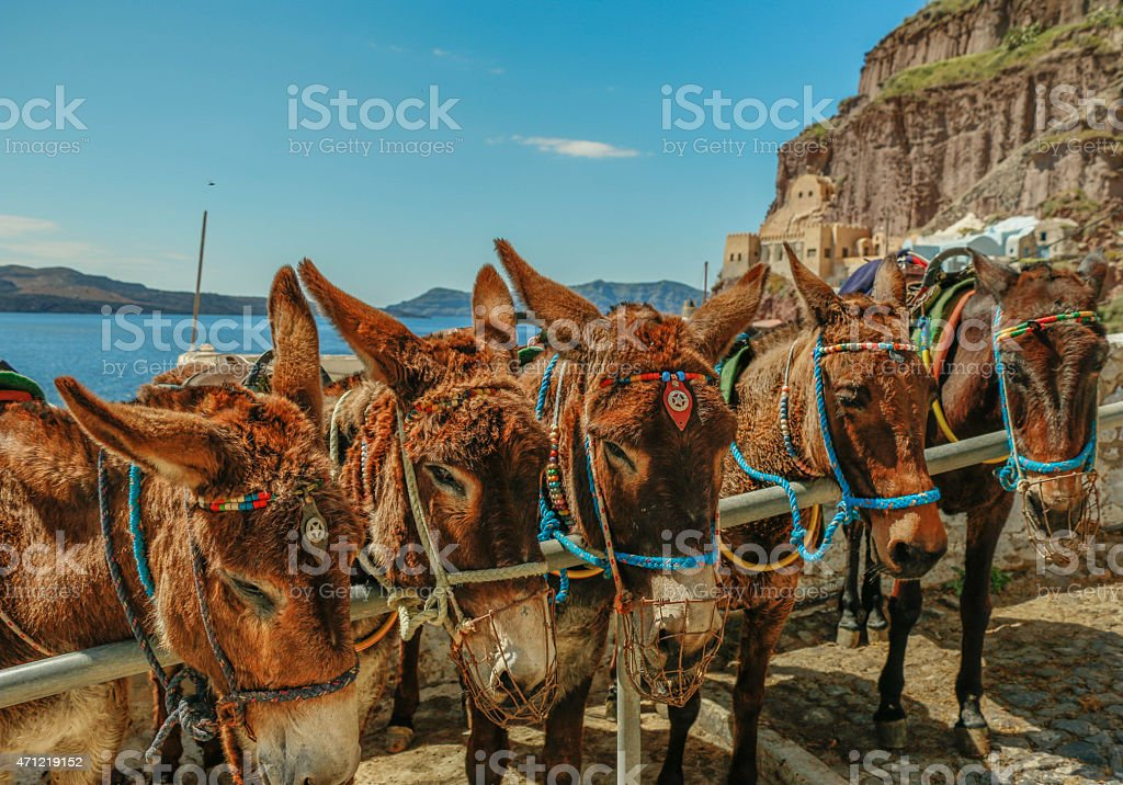 Donkeys stands in Santorini stock photo