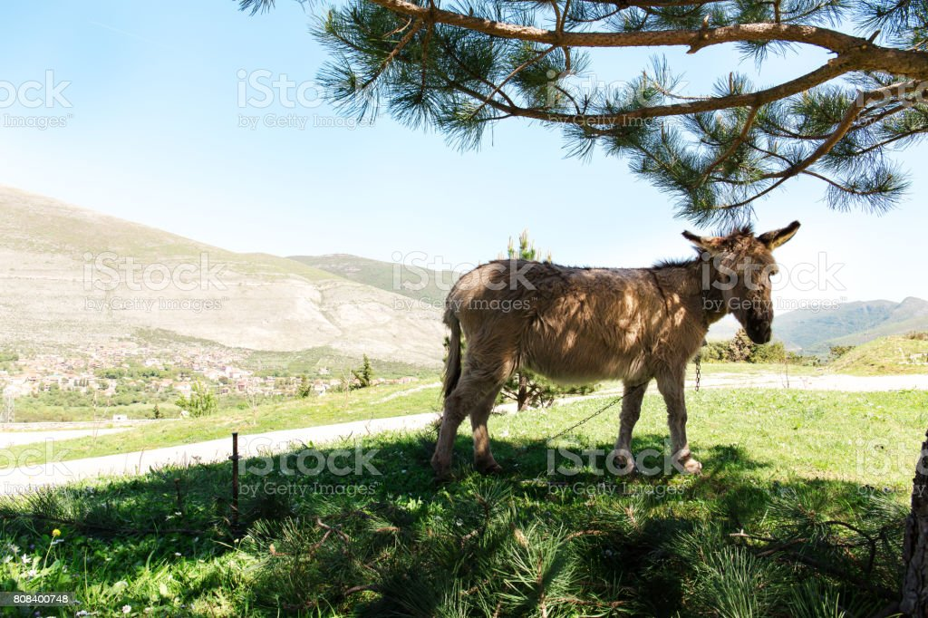donkeys under the tree stock photo