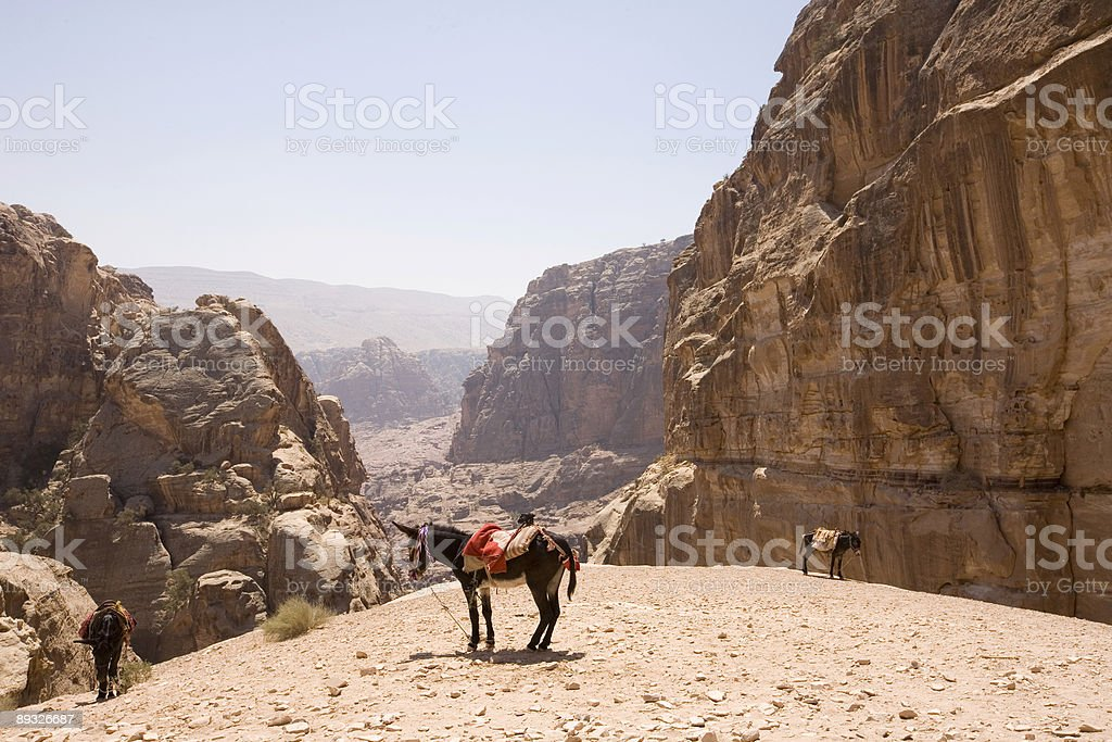 Donkeys with view of wadis near Petra Jordan royalty-free stock photo