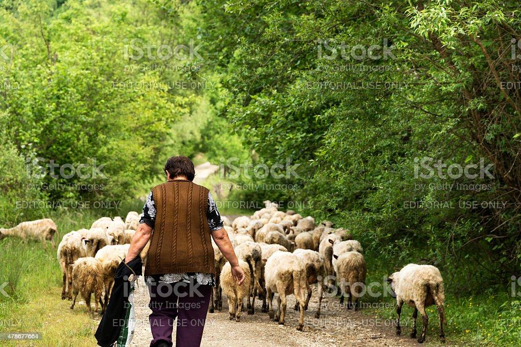 Donna con pecore, Srmcevice, Bosnia e Erzegovina stock photo