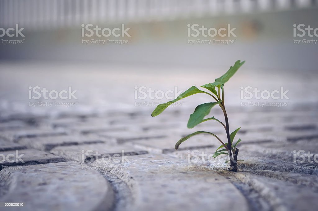 don't be afraid of difficulties stock photo