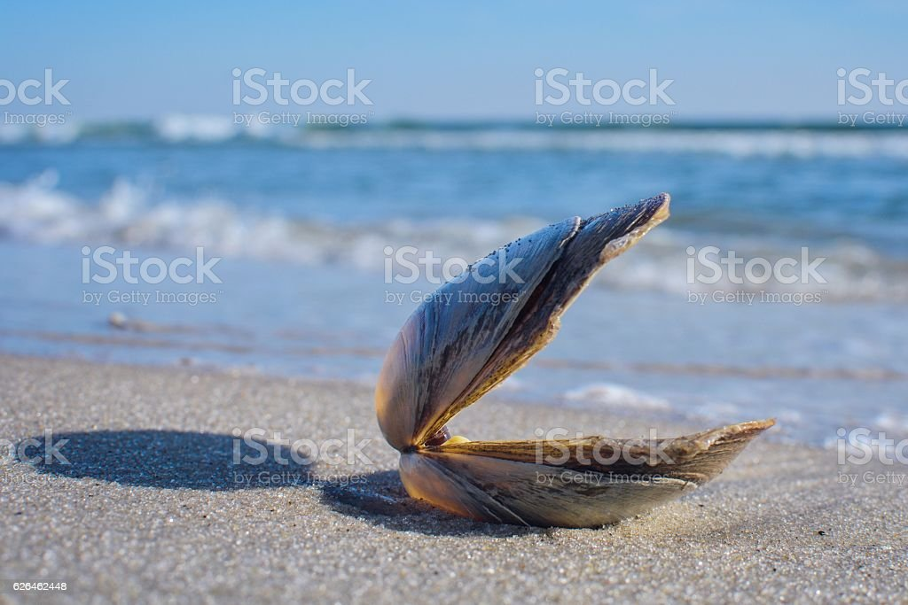 Don't Clam Up stock photo