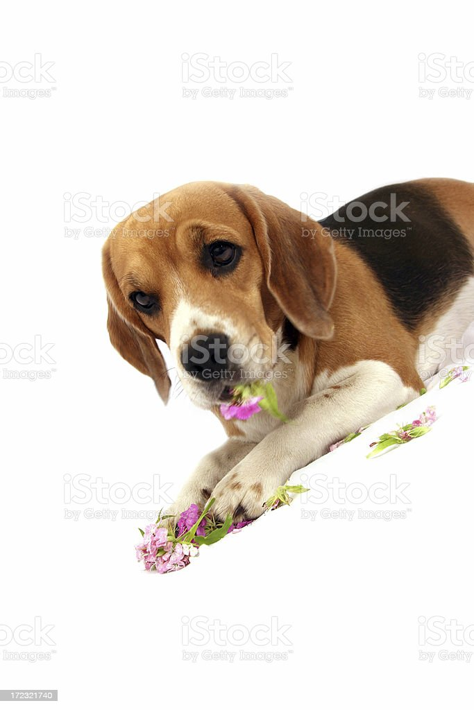Don't eat flowers! royalty-free stock photo