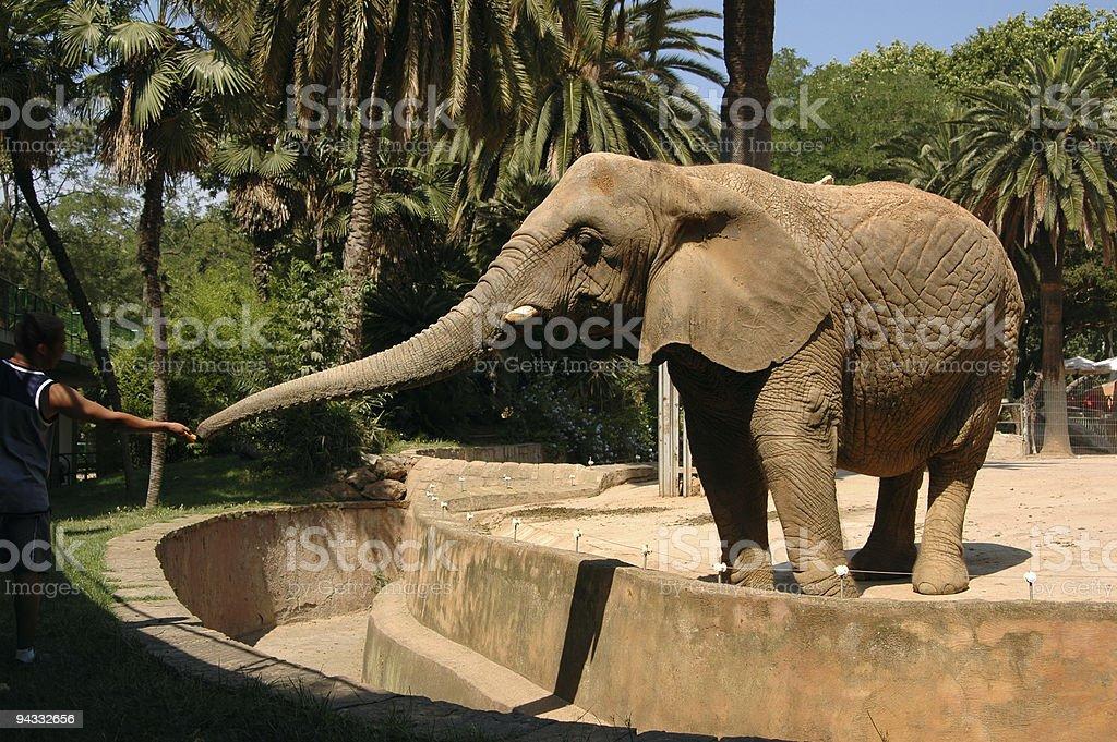 Don't Feed the Elephants stock photo
