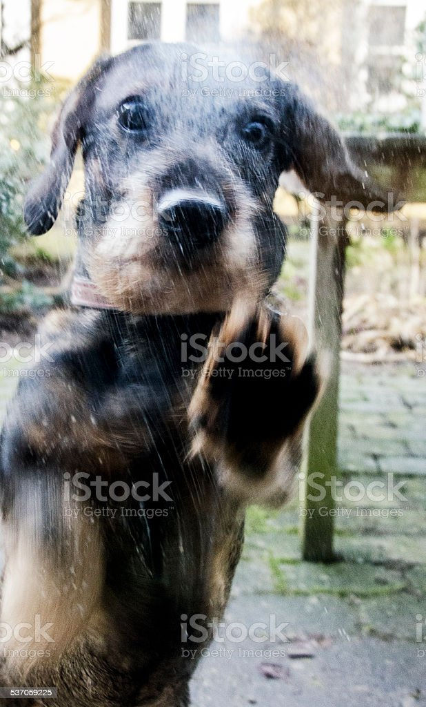 Don`t forget the dog stock photo