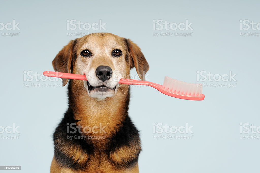 Don't forget to brush your teeth royalty-free stock photo