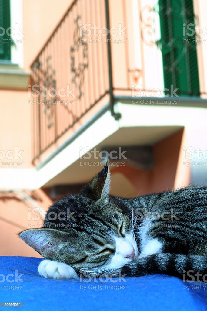 Don't get caught napping royalty-free stock photo