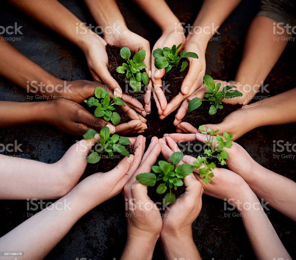 Don't grow apart, grow together stock photo