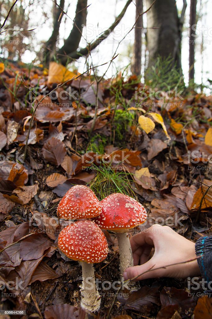 Don`t pick those mushrooms stock photo