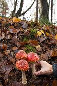 Don`t pick those mushrooms