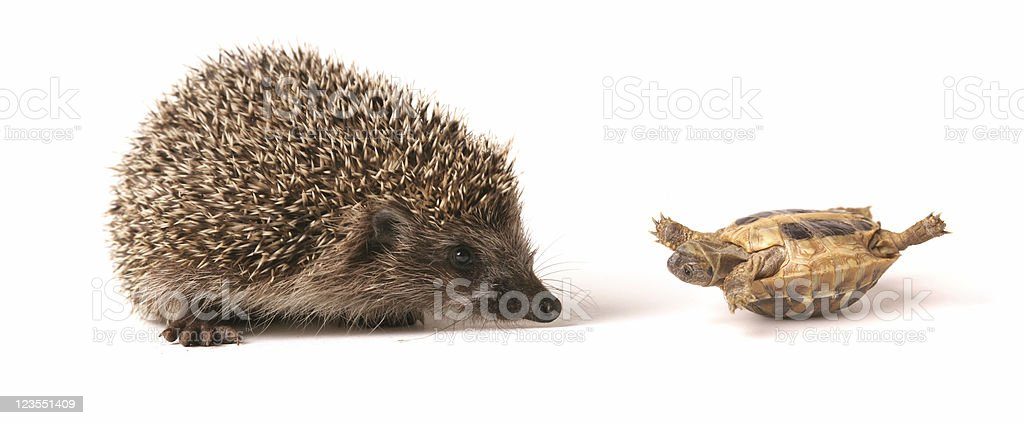 Don't you exercise? stock photo