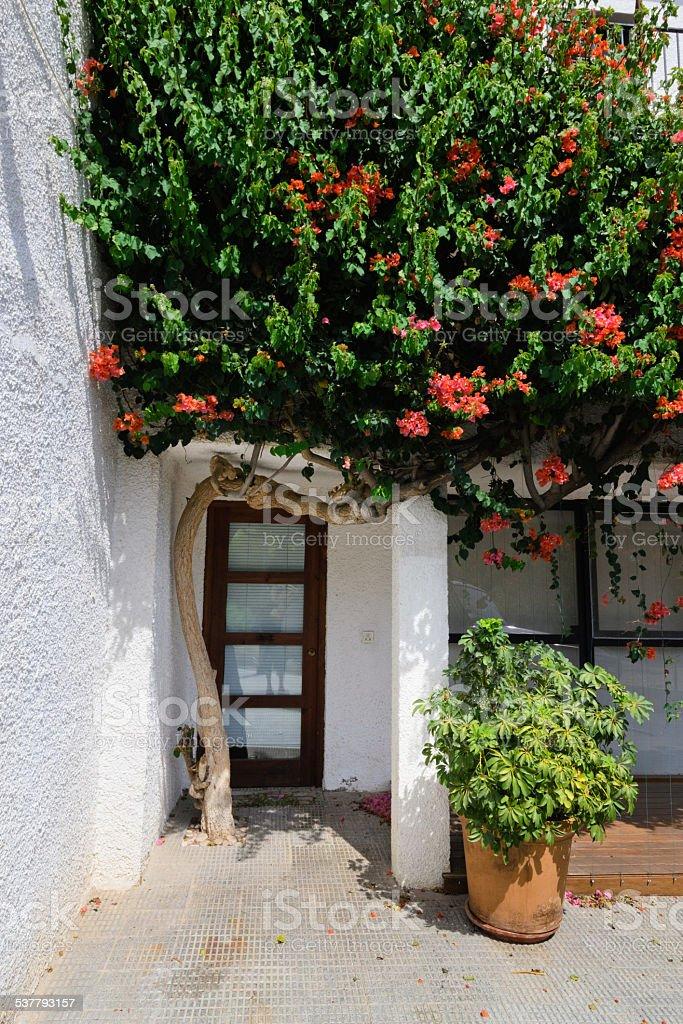 Puerta y árbol de flor abriéndose foto de stock libre de derechos