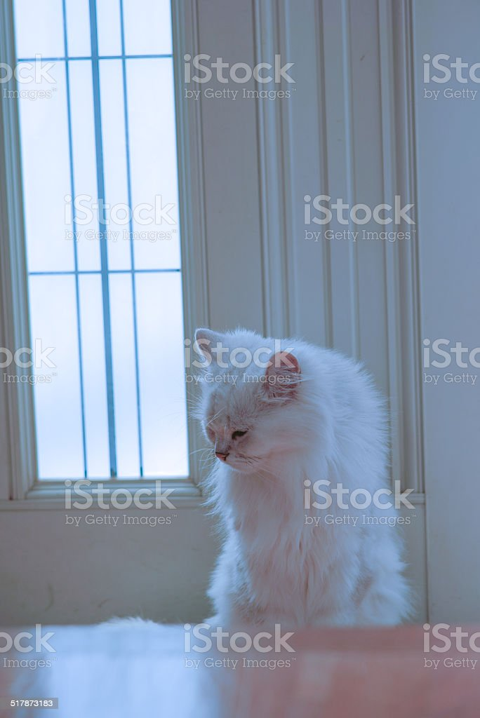 doorkeeper cat stock photo