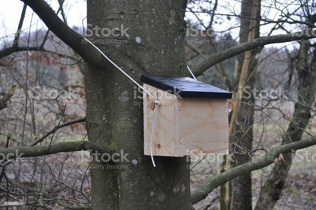 Dor mouse box stock photo