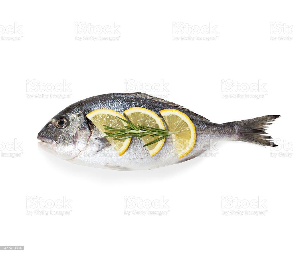 Dorado fish isolated on white background. stock photo