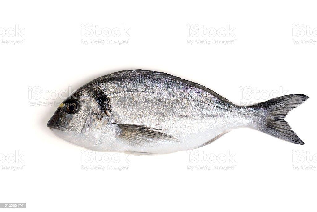 Dorado fish on isolated background stock photo