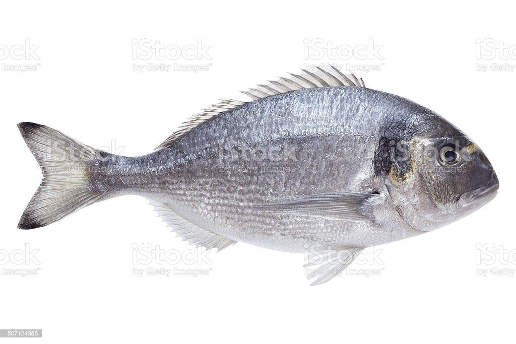 Dorado fish on white background stock photo