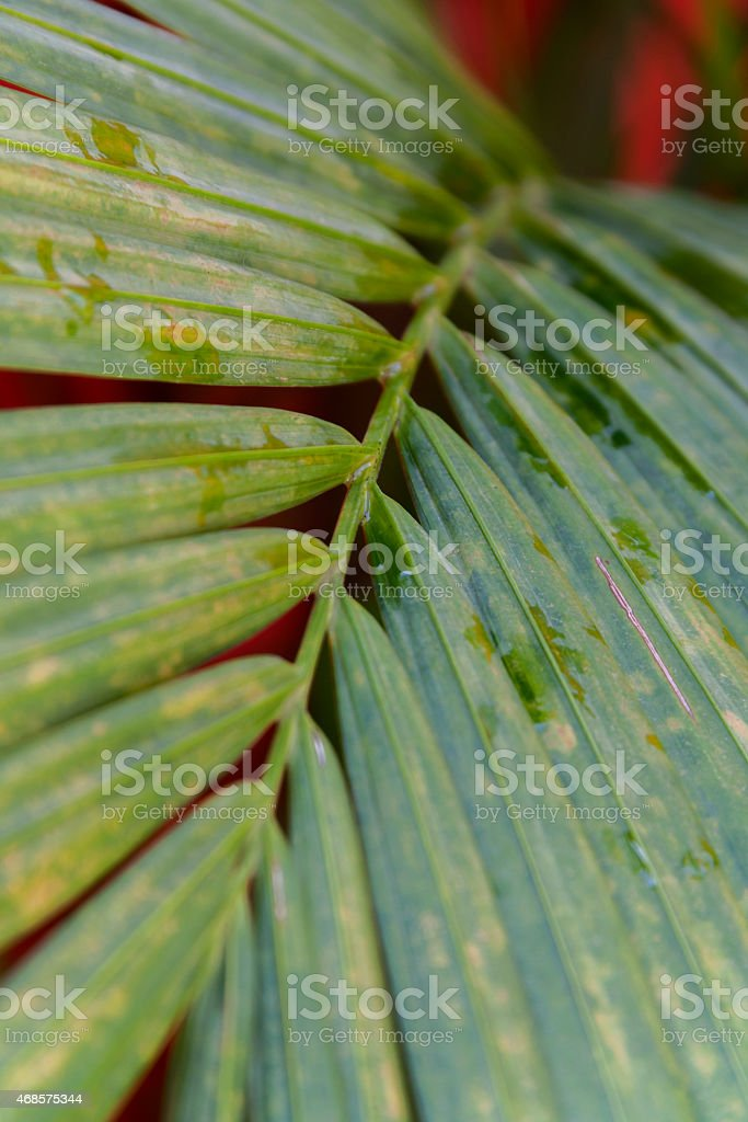 Dot on green leaf royalty-free stock photo
