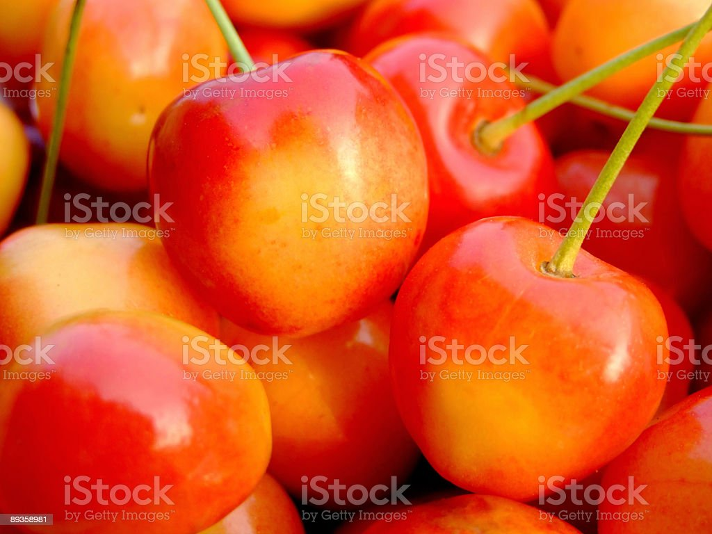 Double color cherries royalty-free stock photo