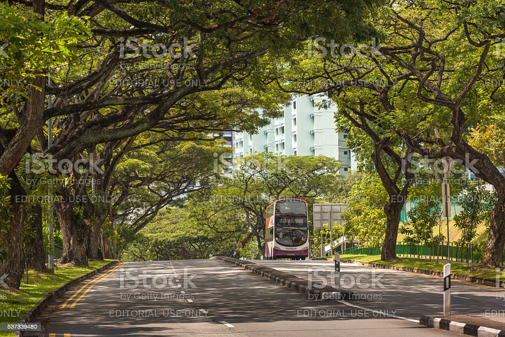 Double decker bus along a tree-lined road stock photo