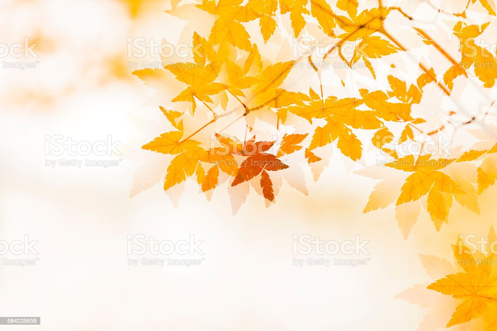 Double exposure of Autumn Leaves stock photo