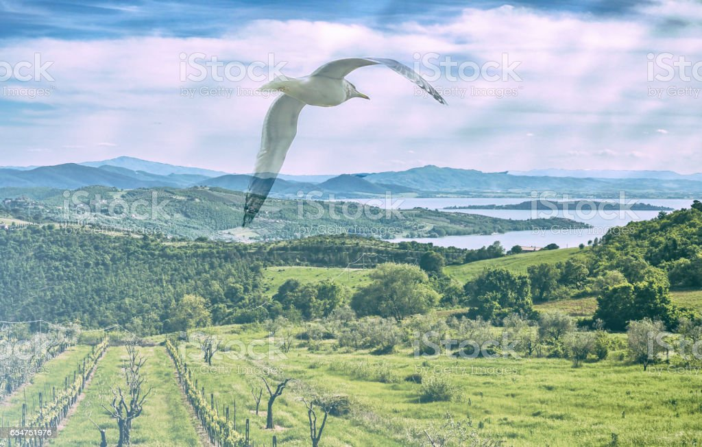 Double exposure of beautiful italian landscape and seagull flying stock photo