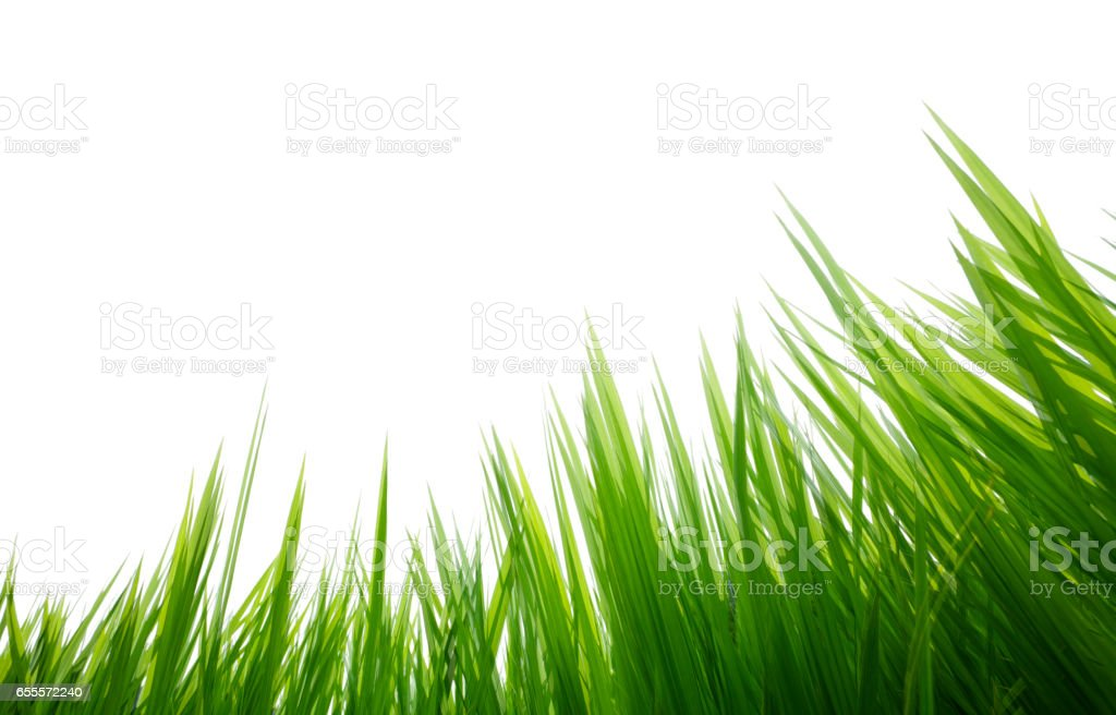 Double Exposure of Green Grass stock photo