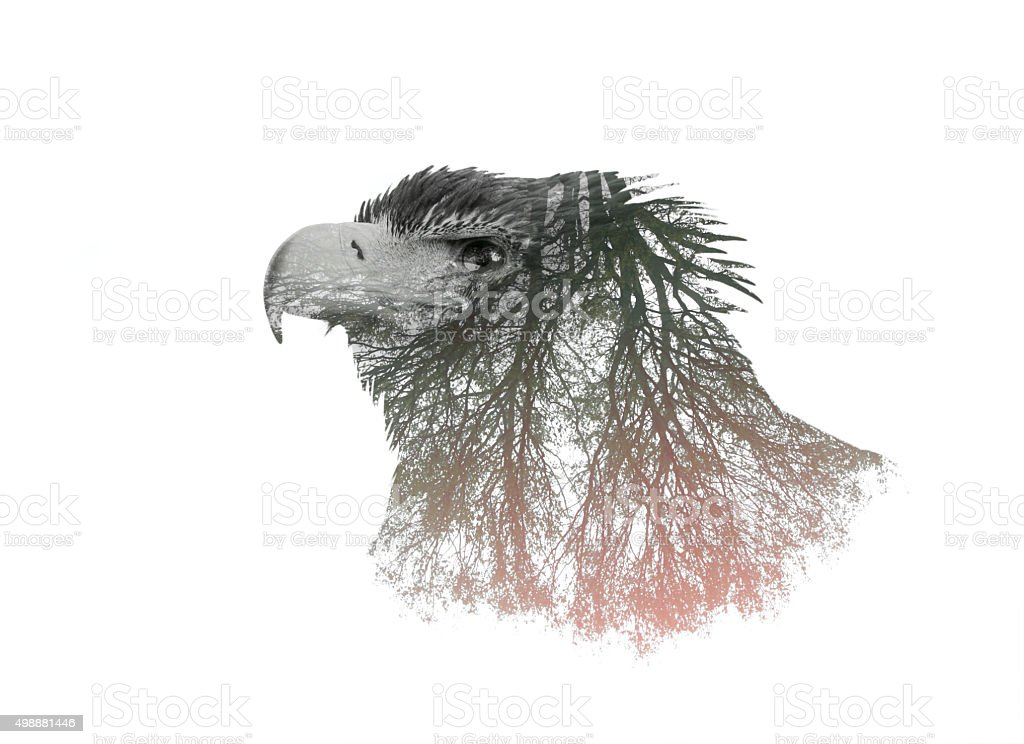 Double Exposure Portrait of Eagle and Tree Branch stock photo