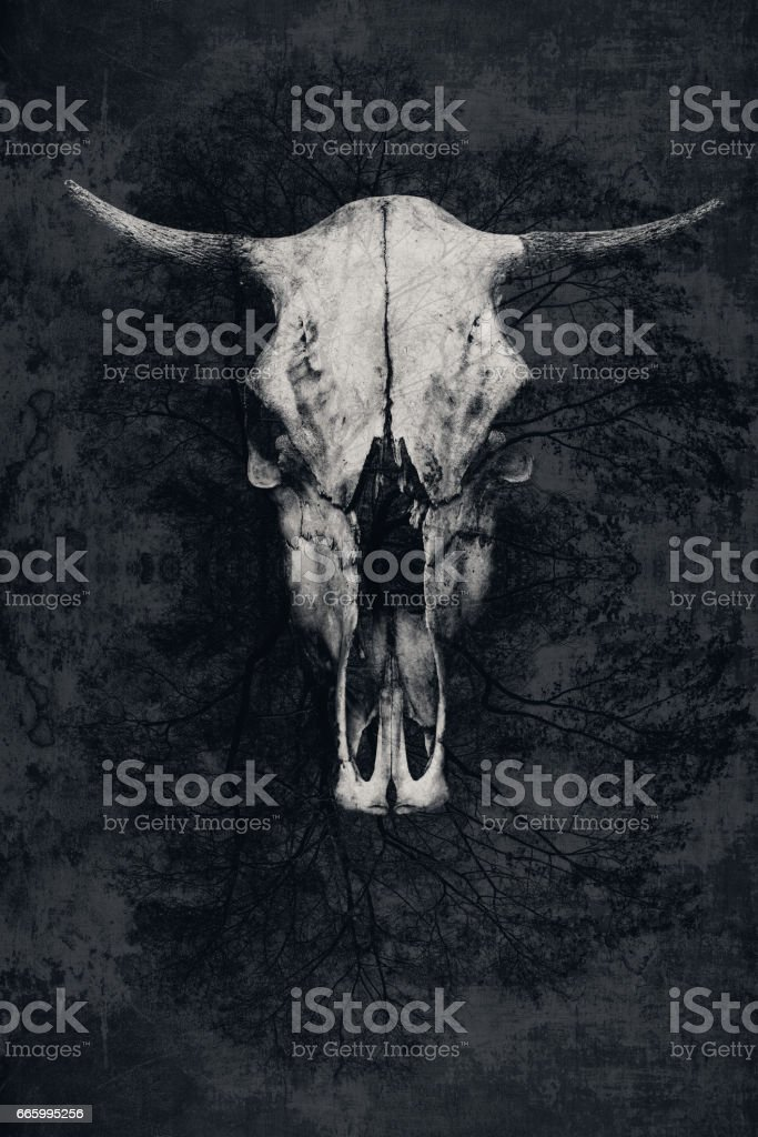 Double exposure. The skull of a bull with horns and tree stock photo