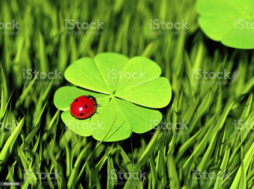 Double Luck royalty-free stock photo