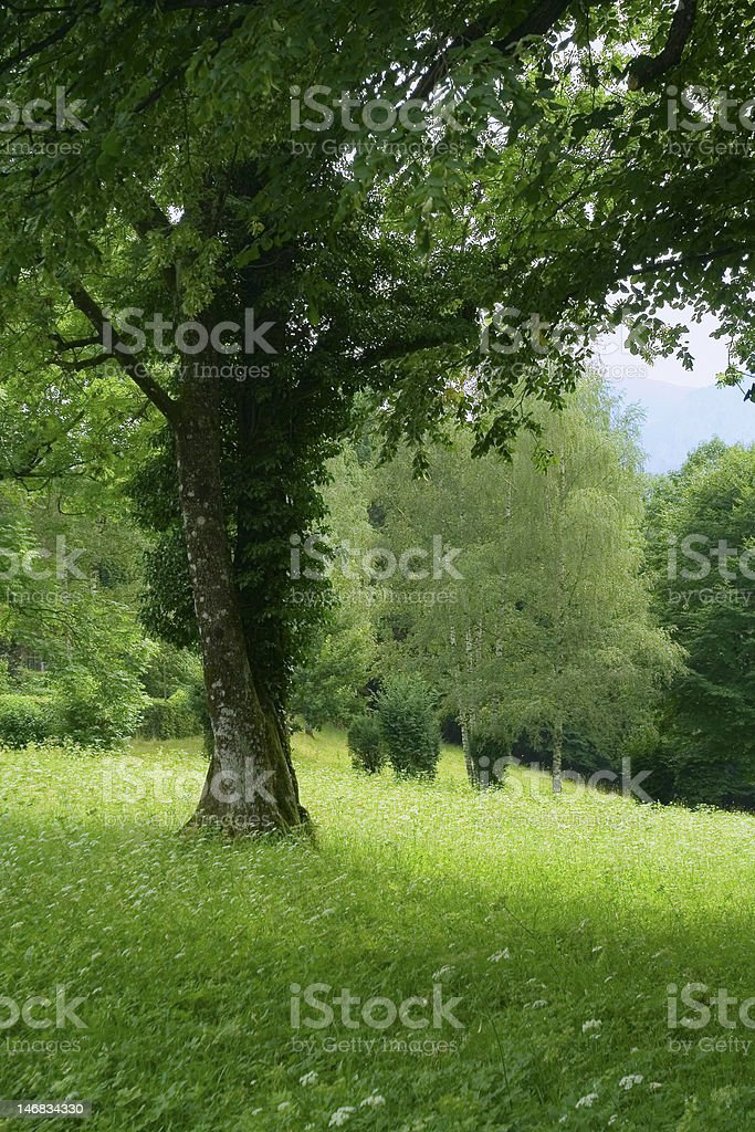 double tree sur green meadow photo libre de droits
