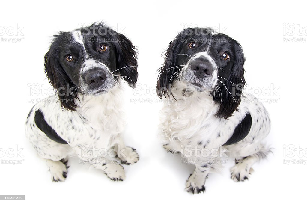 double trouble! royalty-free stock photo
