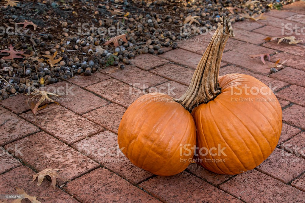 Double Twin Pumpkins Joined on one Stem stock photo