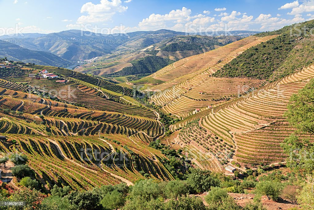 Douro river vineyards, Portugal stock photo