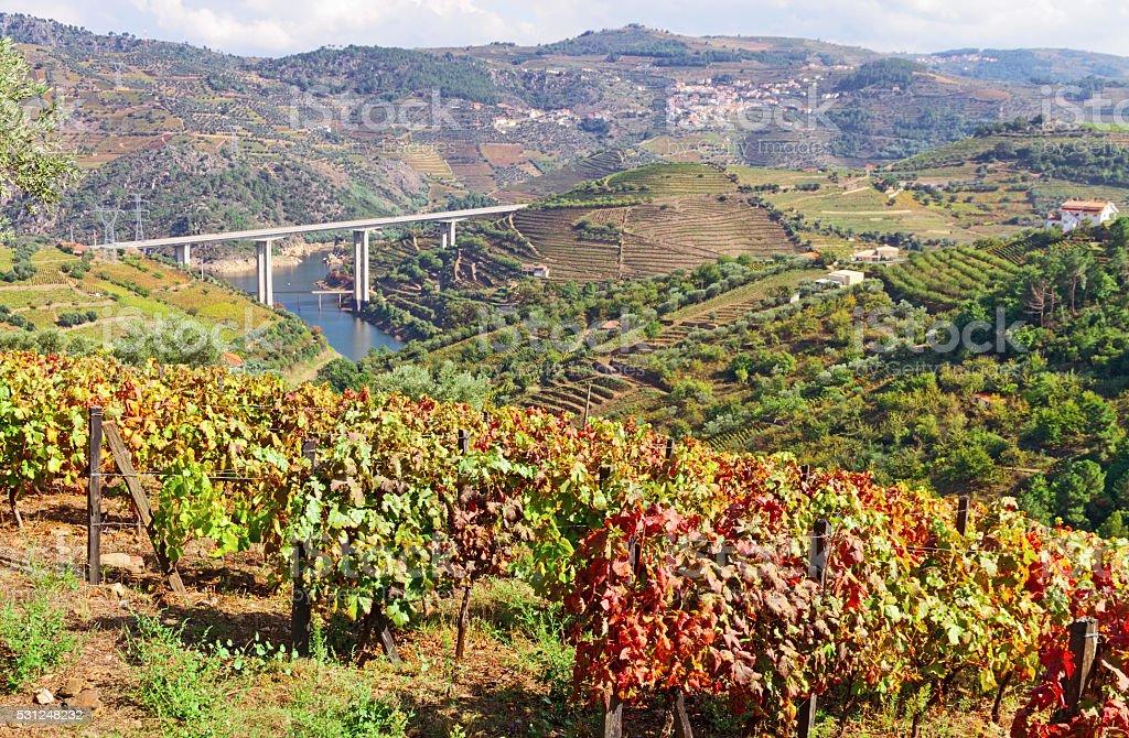 Douro valley at autumn stock photo
