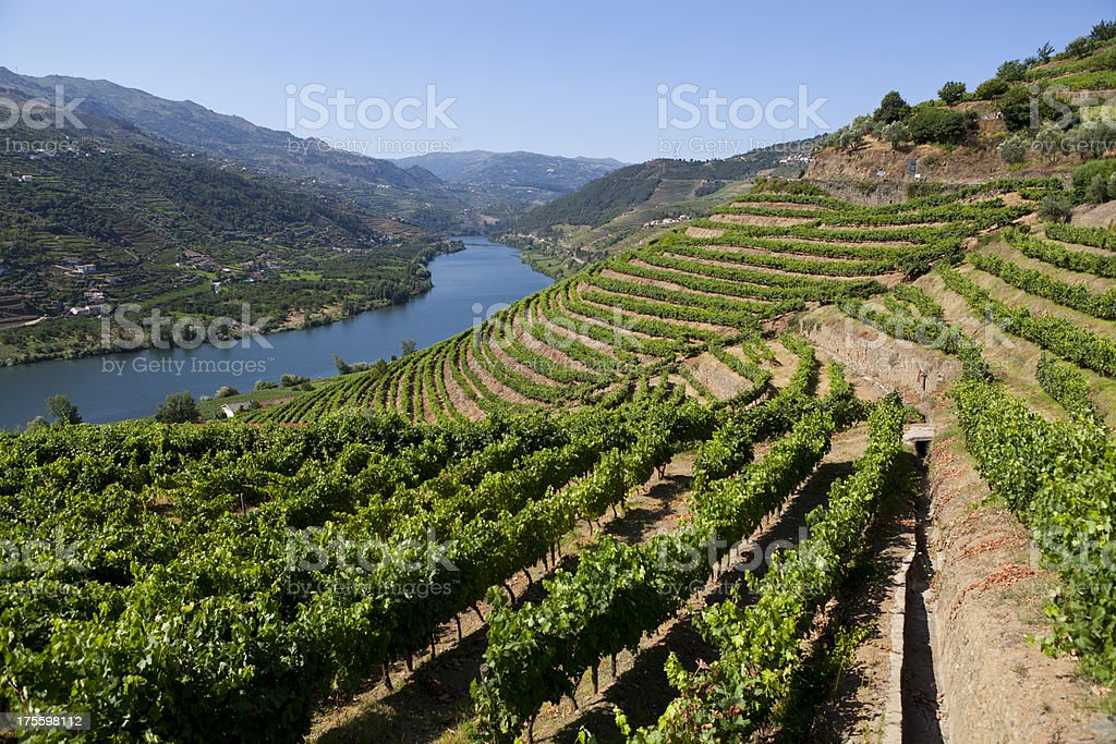 Douro Valley stock photo