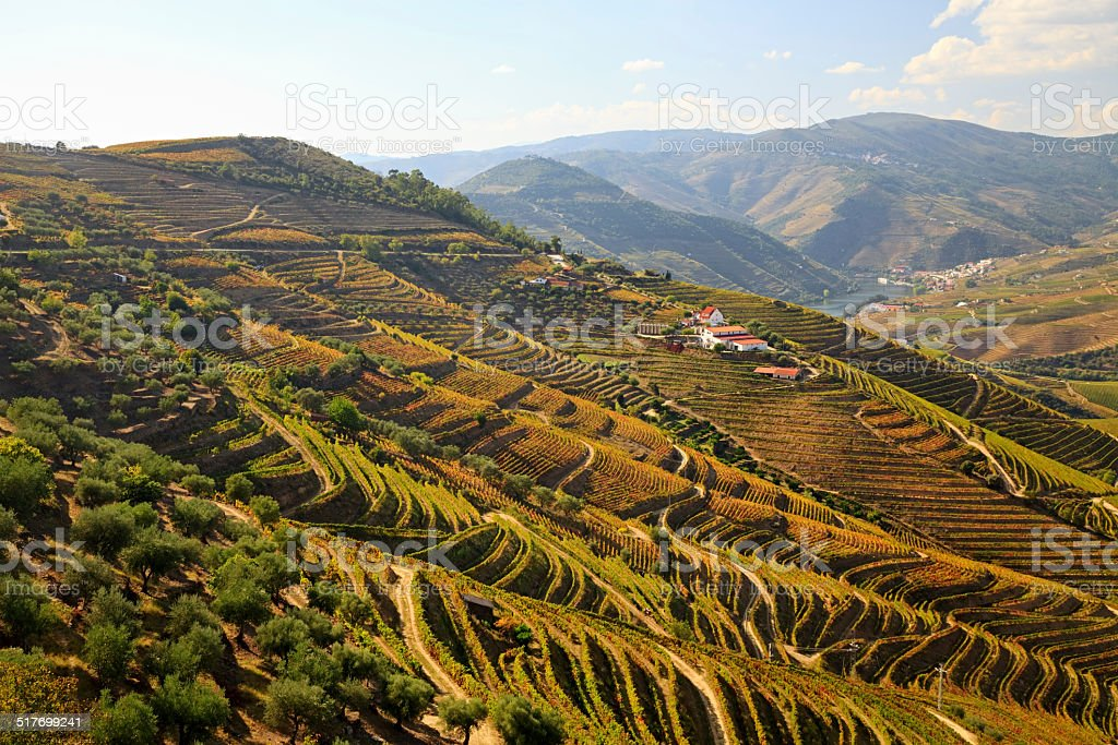 Douro Valley, Portugal stock photo