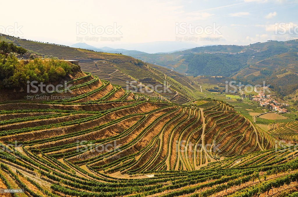Douro Valley: Vineyards near Duero river and Pinhao, Portugal stock photo