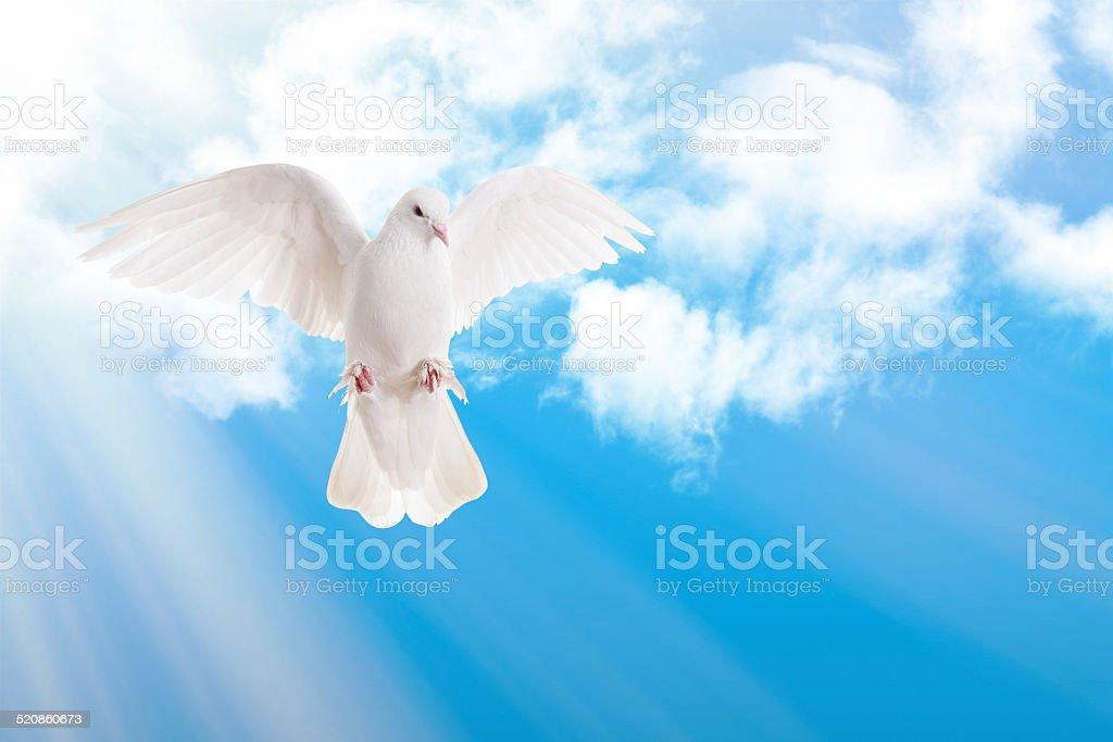 Dove and Sky stock photo