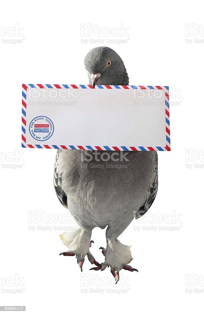 Dove Carrying Air Mail Envelope White Background photo libre de droits