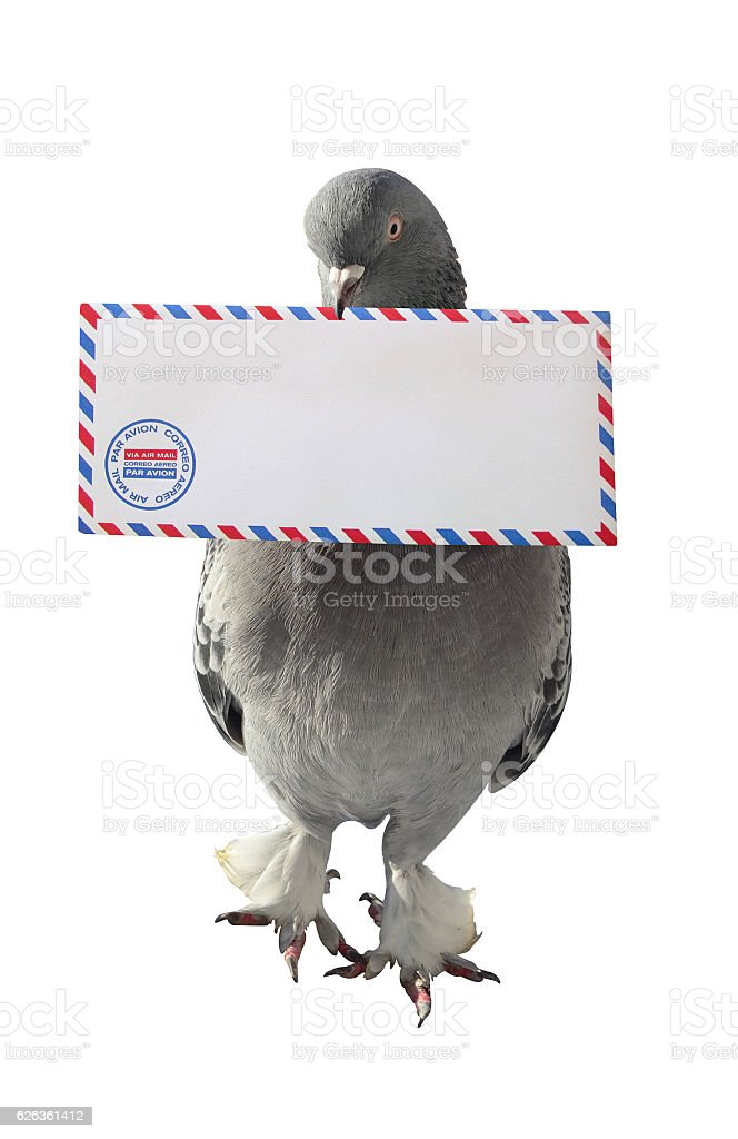 Dove Carrying Air Mail Envelope White Background stock photo
