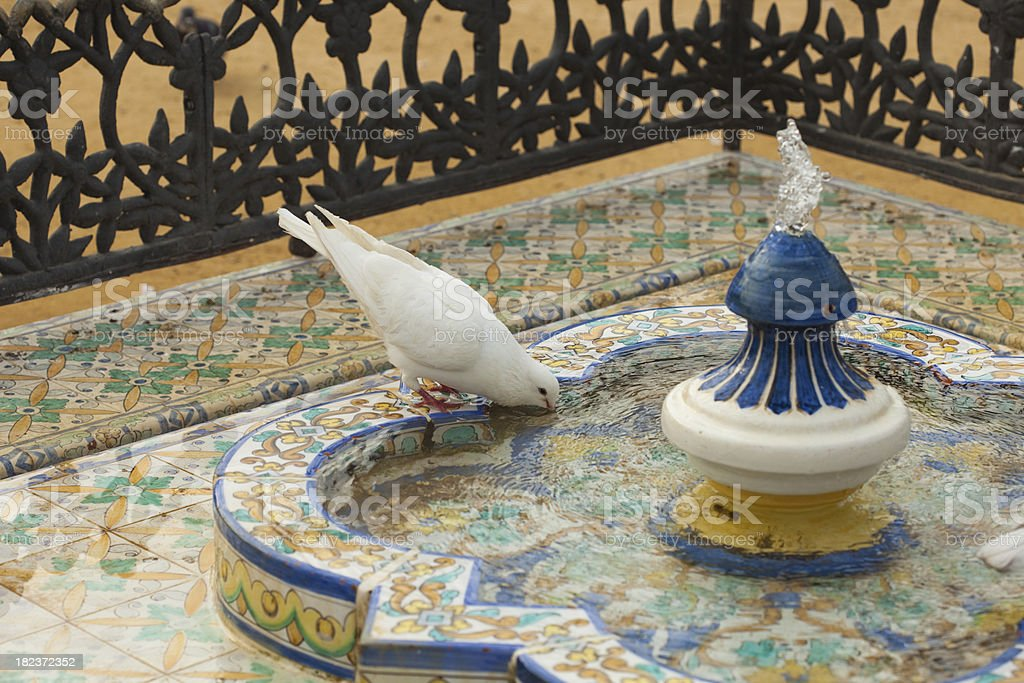 dove in the fountain royalty-free stock photo